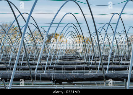 Strawberry growers polytunnels out of season with the covers removed to protect them from bad weather. - Stock Image
