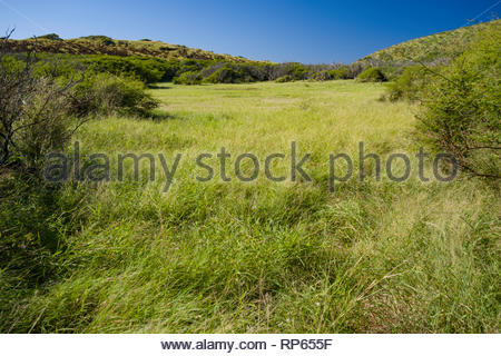 Ancestral home of 'Ihi'Ihilauakea, Koko Head, Koko Head District Park, Hawaii Kai, Oahu, Hawaii, USA - Stock Image