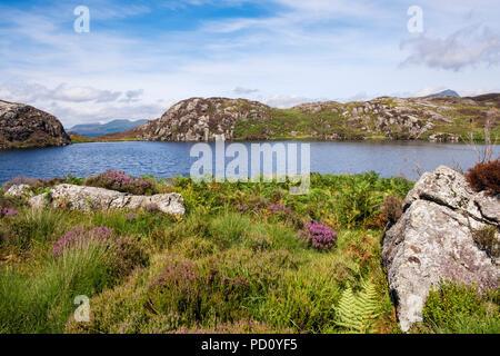 Small upland lake Llyn Yr Arddu in Moelwyn hills of Snowdonia National Park with Nantlle Ridge on horizon in summer. Nantmor Gwynedd Wales UK Britain - Stock Image