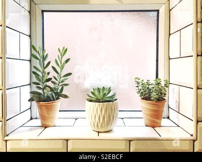 A minimalist windowsill with modern cactus, cacti and succulents in a homely interior - Stock Image