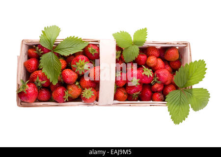 Fresh juicy strawberries in wooden basket isolated - Stock Image
