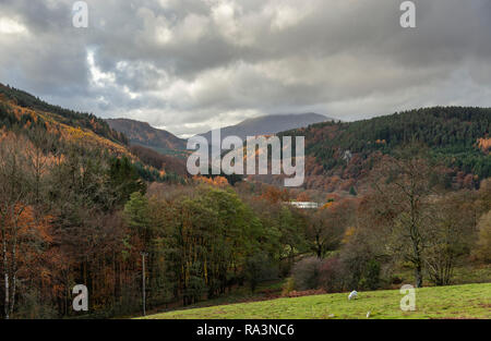 Trees in autumn colours in the Gwydyr Forest, Snowdonia, North Wales near Betws-y-Coed - Stock Image
