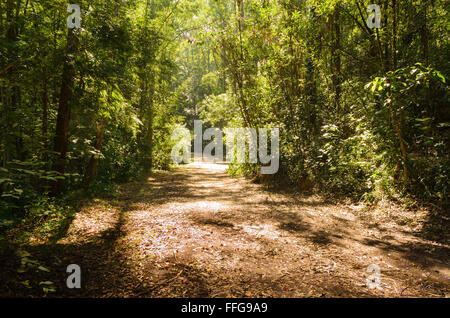 footpath between trees in green dark forest - Stock Image