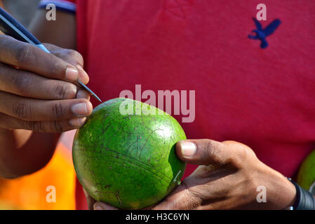 Man carving scenes on gourds, then cuts away the background to make into hanging  souvenirs for  tourists  St Lucia,South - Stock Image