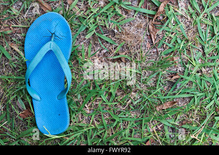 Worn out single blue thong or flip flop against worn down lawn grass. - Stock Image
