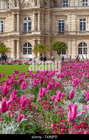 Pink tulips bloom below Palais du Luxembourg in Jardin du Luxembourg, Paris, France - Stock Image