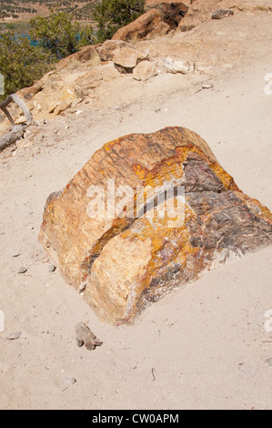 USA Utah, petrified wood at  Escalante Petrified Forest State Park. - Stock Image