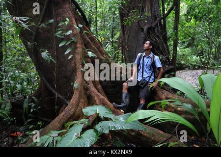 Hiker on trail Osa Peninsula Costa Rica mahogany tree in primary rain forest. Tropical Jungle tree - Stock Image