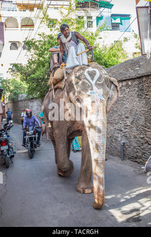 A elephant on a small street in Udaipur, India. - Stock Image