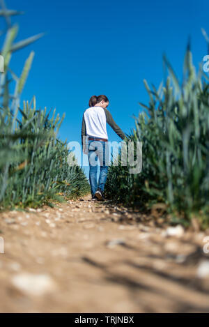 woman running her hand through ripening wheat in a field, low angle - Stock Image