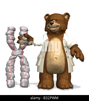 baer with chromosome - Stock Image