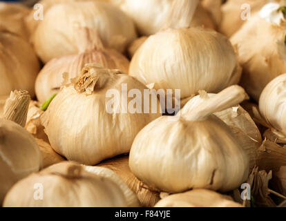 Smoked Garlic bulbs a popular flavoursome ingredient in modern bistro recipes. - Stock Image