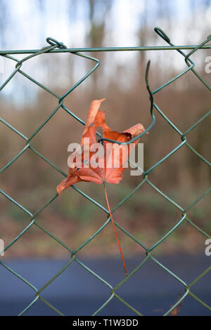 Dried leaf hooked on a iron fence. - Stock Image