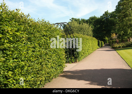 Beech Hedge, Royal Horticultural Gardens Wisley, Woking, Surrey. - Stock Image