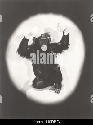 Monkey doing an Al Jolson imitation - Stock Image