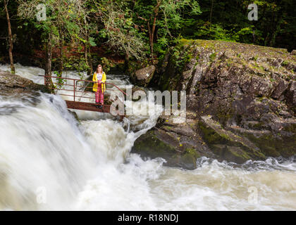 Excitement at Skelwith Force, amidst the roaring torrent of the River Brathay, Lake District, Cumbria, UK - Stock Image
