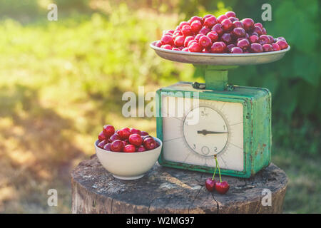 Old vintage scales on a stump full of ripe cherries - Stock Image