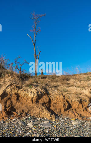 Bare tree on the slope near the sea shore on a sunny summer day - Stock Image