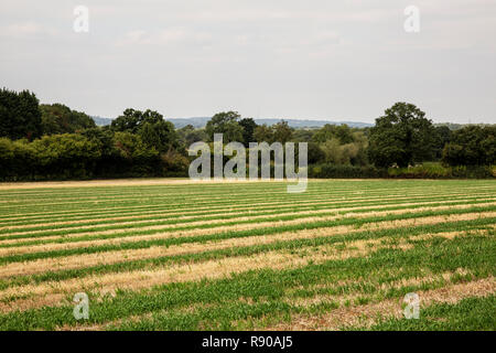 View across a rural field with woodland in the distance. - Stock Image