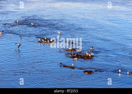 Harbour, Al Jadida, Morocco - Stock Image