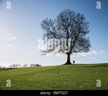 A  single leafless tree with a single person silhouetted against a clear blue sky. - Stock Image