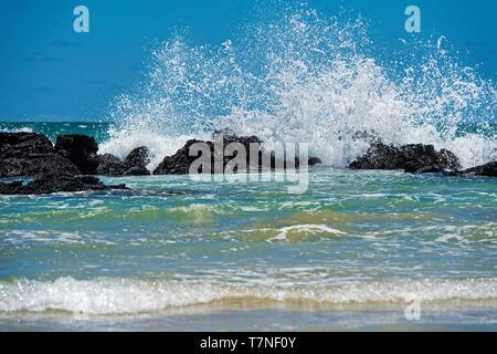 Hydrodynamic power, waves breaking at the lava rocks of the coast, Isabela Island, Galapagos Islands, Ecuador - Stock Image