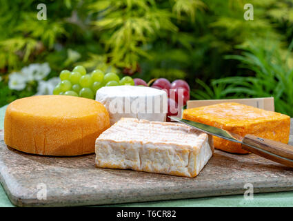French cheeses collection, yellow Riche de Saveurs, Vieux Pane and Le peche des bons peres cheeses served with grapes on marble plate outdoor in green - Stock Image