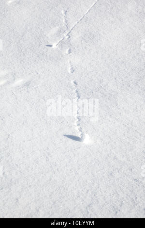Small snowballs rolling down fresh snow - Stock Image