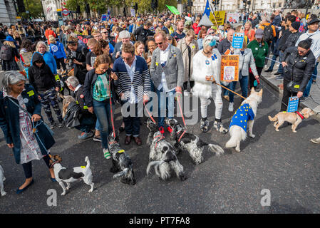 London, UK. 7th October 2018. Wooferendum, dogs marching against Brexit. Dogs against Brexit walked through central London, from Waterloo Place to Parliament Square. Dog owners are concerned that Brexit is likely to do away with the EU Pet Passport scheme, create a shortage of skilled vets and increase the cost of pet food. Credit: Stephen Bell/Alamy Live News. - Stock Image