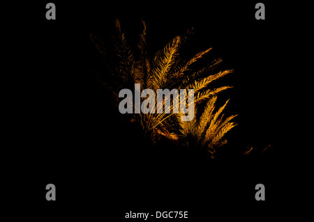 palm trees illuminated at night - Stock Image