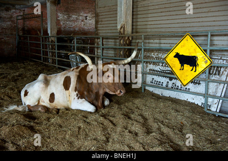 Longhorns sitting in ranch at The Stockyards in Fort Worth,Texas - Stock Image