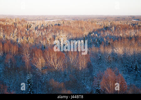 Snowy birch tree tops lit up from sun rays - Stock Image