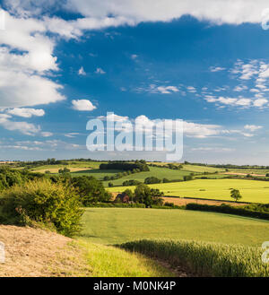 A summer evening near Belchford on the Lincolnshire Wolds, the rolling hill uplands underlain by Cretaceous Chalk - Stock Image