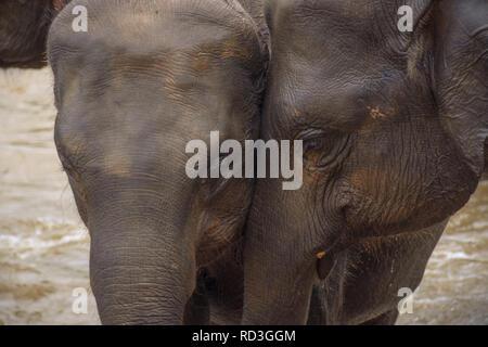 Two elephants - Stock Image