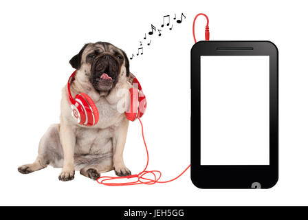 music app concept, singing pug puppy dog with red headphones, sitting next to blank phone or tablet - Stock Image