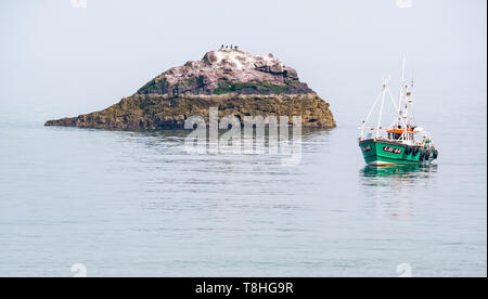 Dunbar fishing boat in calm sea next to small rocky island with seabirds,Firth of Forth, East Lothian, Scotland, UK - Stock Image