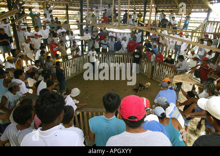 Filipinos watch a cockfighting bout at a rural cockhouse in Oriental Mindoro, Philippines. - Stock Image