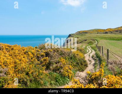 View along The Cleveland Way National Trail coastal footpath near Saltburn on the North Yorkshire coast. England.UK - Stock Image