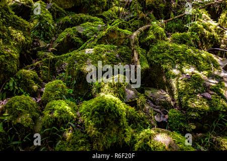 Moss grows on rocks near the Berlin Waterfall near Dullstroom village in South Africa - Stock Image