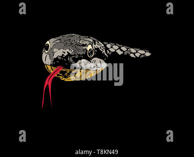 Computer drawn colour illustration of the head of a European Smooth Snake (Coronella austriaca) head-on with outstretched tongue on black. - Stock Image