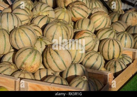 Melon on sale in the market of Sanary sur Mer, France - Stock Image
