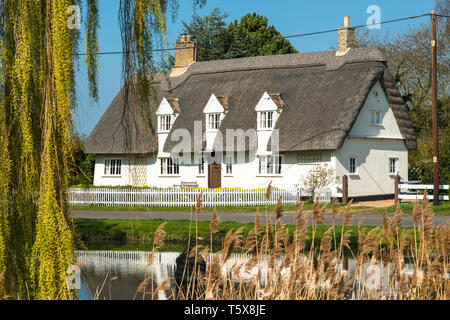 Characterful thatched cottage opposite the green in Wicken Village close to Wicken Fen, Cambridgeshire, England, UK. - Stock Image