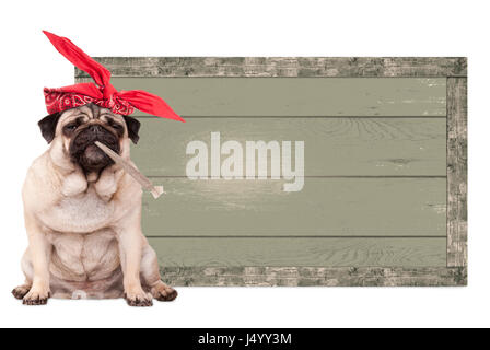 cute pug puppy dog being high on smoking marijuana weed joint, next to blank vintage wooden sign isolated on white - Stock Image