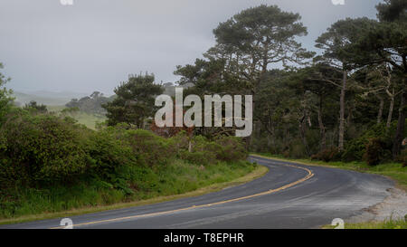 Pierce Point Road in Point Reyes National seashore on a foggy spring day featuring green grass and cloudless sky - Stock Image
