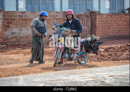 Man on motorcycle transporting poultry to market, Heho Myanmar (Burma) - Stock Image