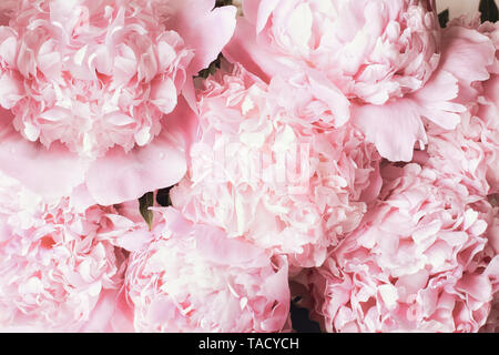 Beautiful bouquet of pink Peony flower background. Top view or flat lay.. - Stock Image