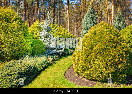 beautiful ornamental landscaped garden with conifers - Stock Image