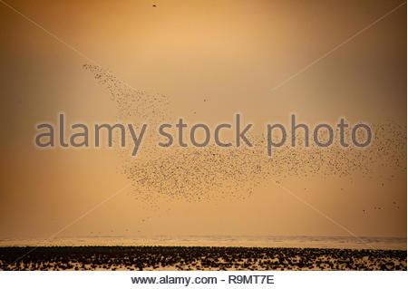 UK Weather, Southport, Merseyside, England, UK. 26th Dec, 2018. Starling murmuration on a largely grey murky Boxing day afternoon at RSPB Marshside Nature Reserve Southport. View from across the Marshes on Southport Coast, Southport, Merseyside, Lancashire, England UK Credit: Christopher Canty Photography/Alamy Live News - Stock Image