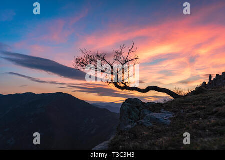 Lonely tree in the edge at sunset - Stock Image