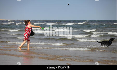 Middle aged woman throwing a ball in to the sea for her black Labrador. - Stock Image